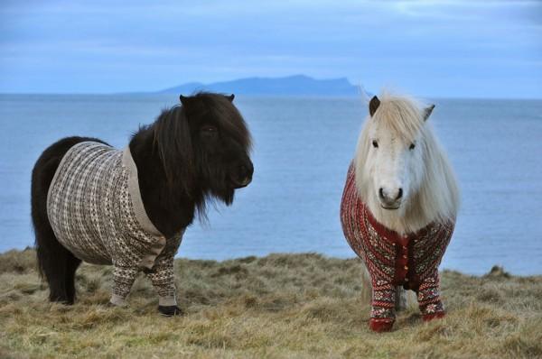 ponies-scotland-6-600x398